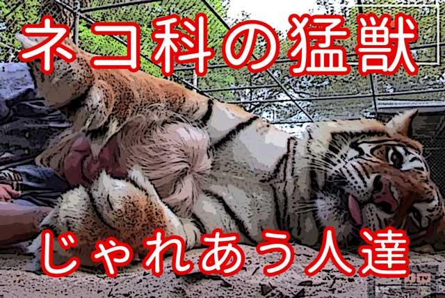 ネコ科の猛獣